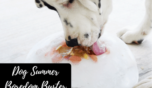 Dog Summer Boredom Buster