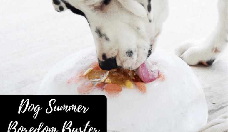 Dog Summer Boredom Buster