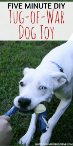 Five-Minute DIY Tug-of-War Dog Toy