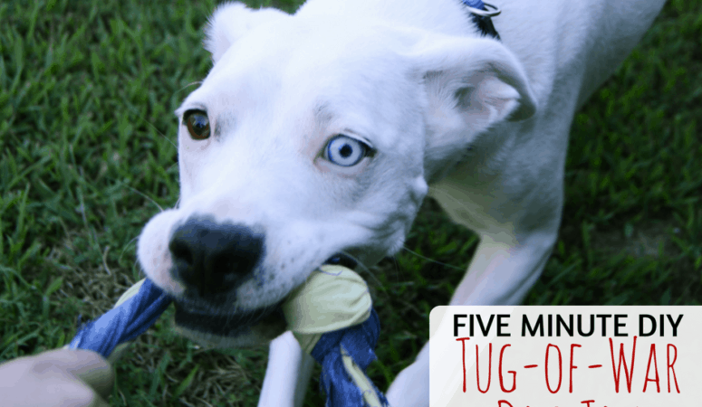 Five-Minute DIY Tug-of-War Dog Toy