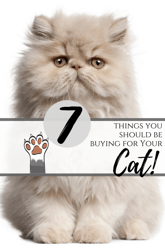 7 things you should be buying for your cat