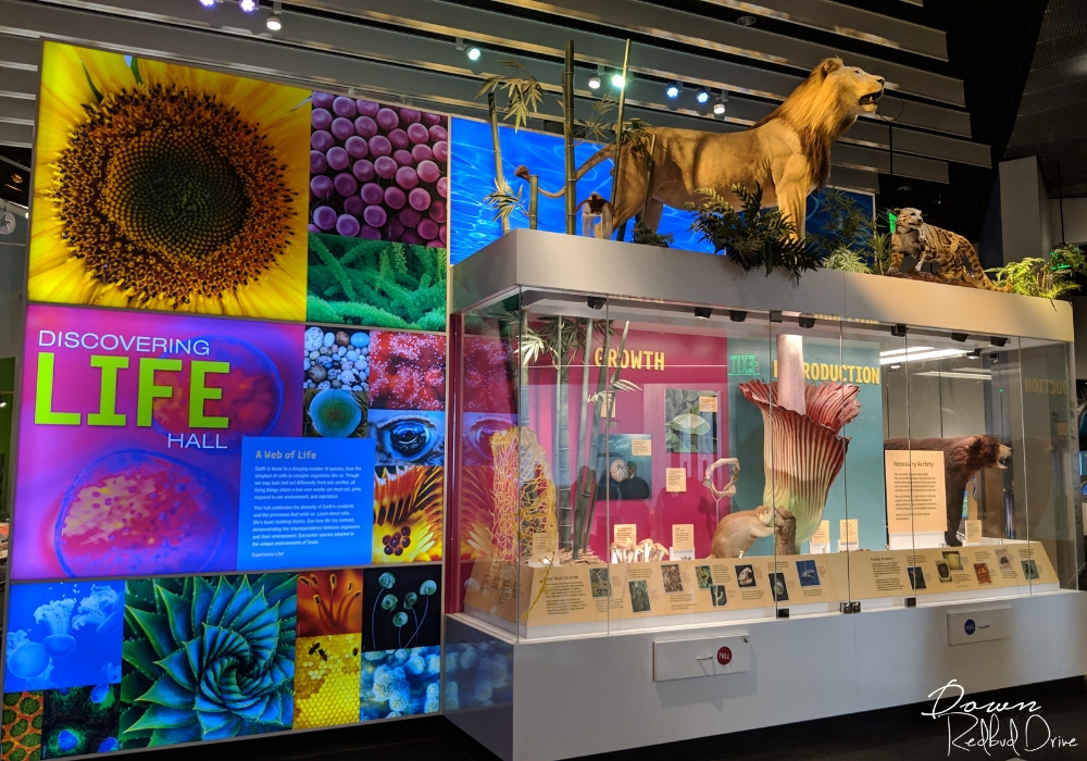 inside the perot museum of nature and science