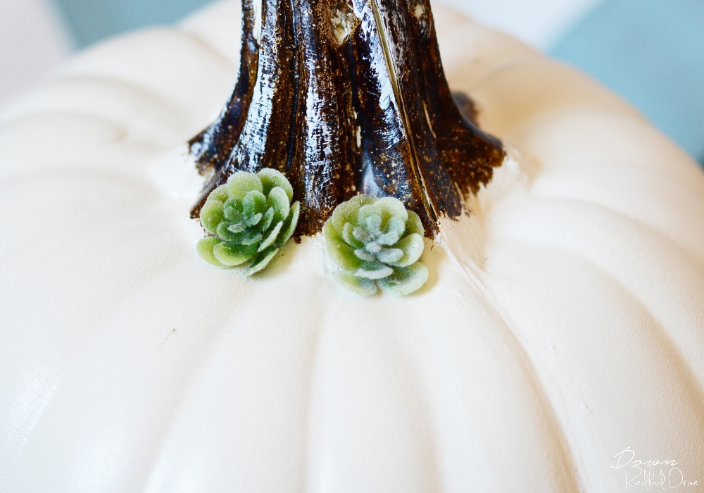 mini succulents on a pumpkin