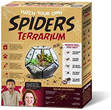 Gift Box Hatch Your Own Spider Terrarium