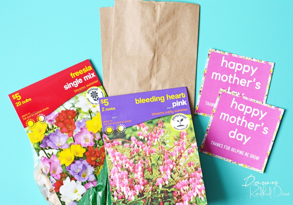 supplies for making a flowering bulb gift for mother's day