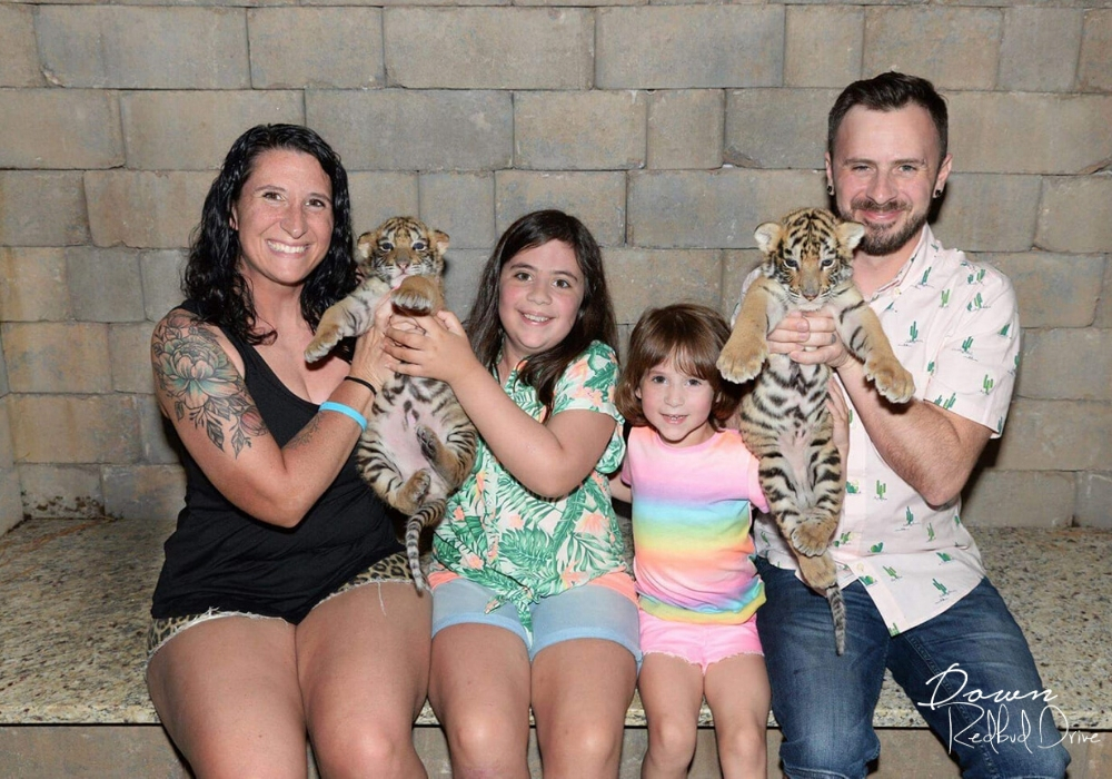Family holding baby tiger cubs at Doc Antle's Myrtle Beach Safari