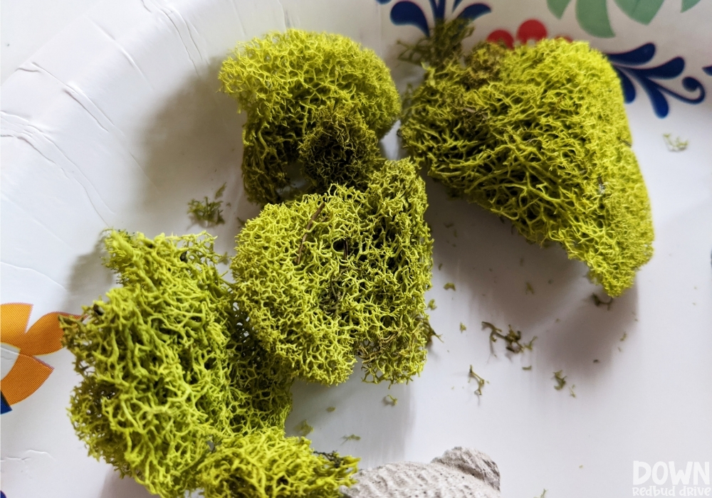 Closeup of the Spanish moss for the DIY concrete bunnies.